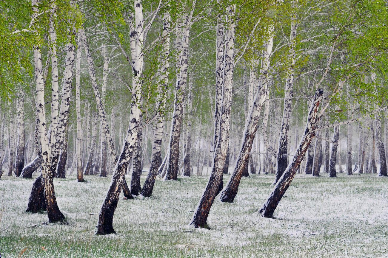 Άννα Αχμάτοβα Μαγιάτικο χιόνι